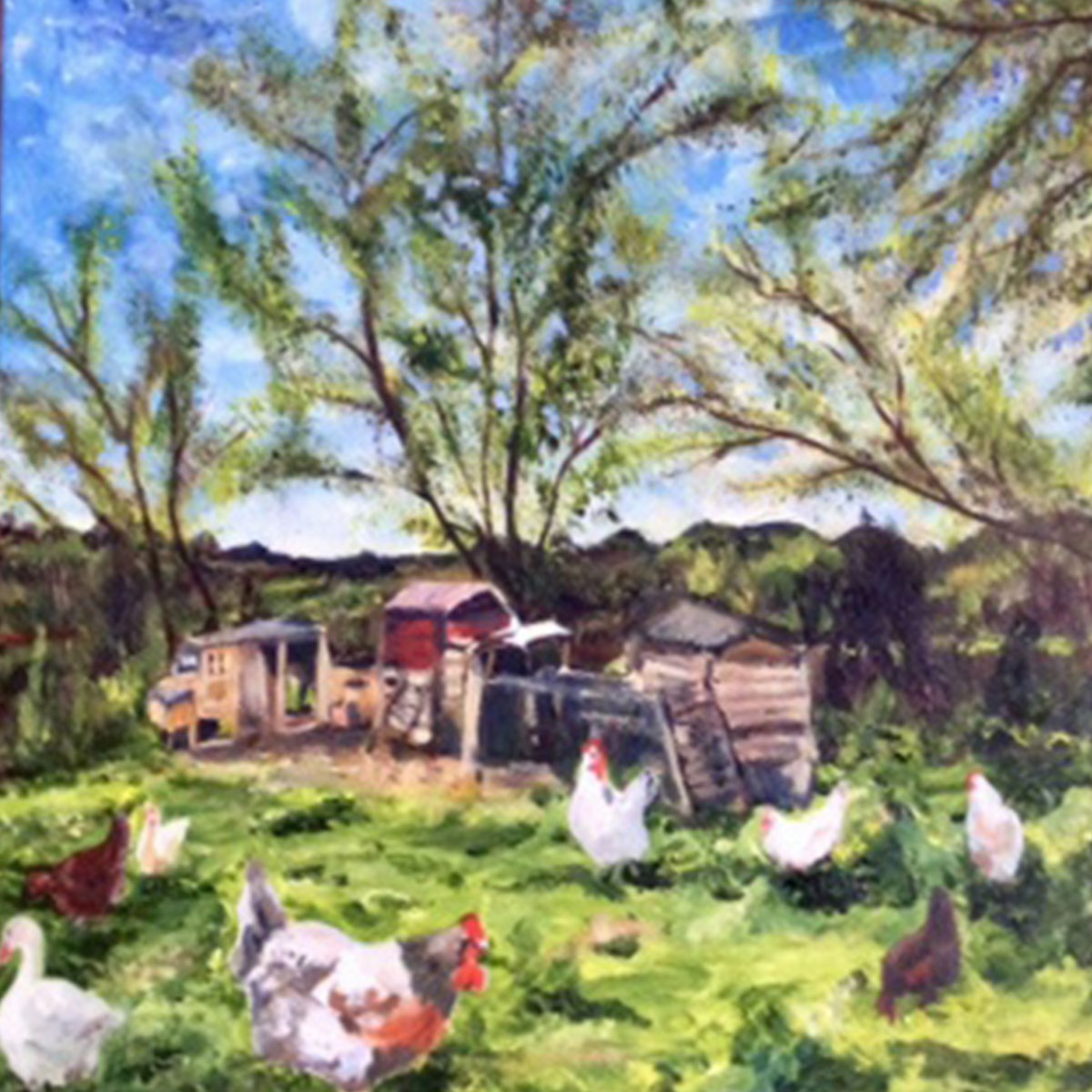 Chickens at Jacklands - £100.  Acrylic (Framed) - 43cm x 43cm
