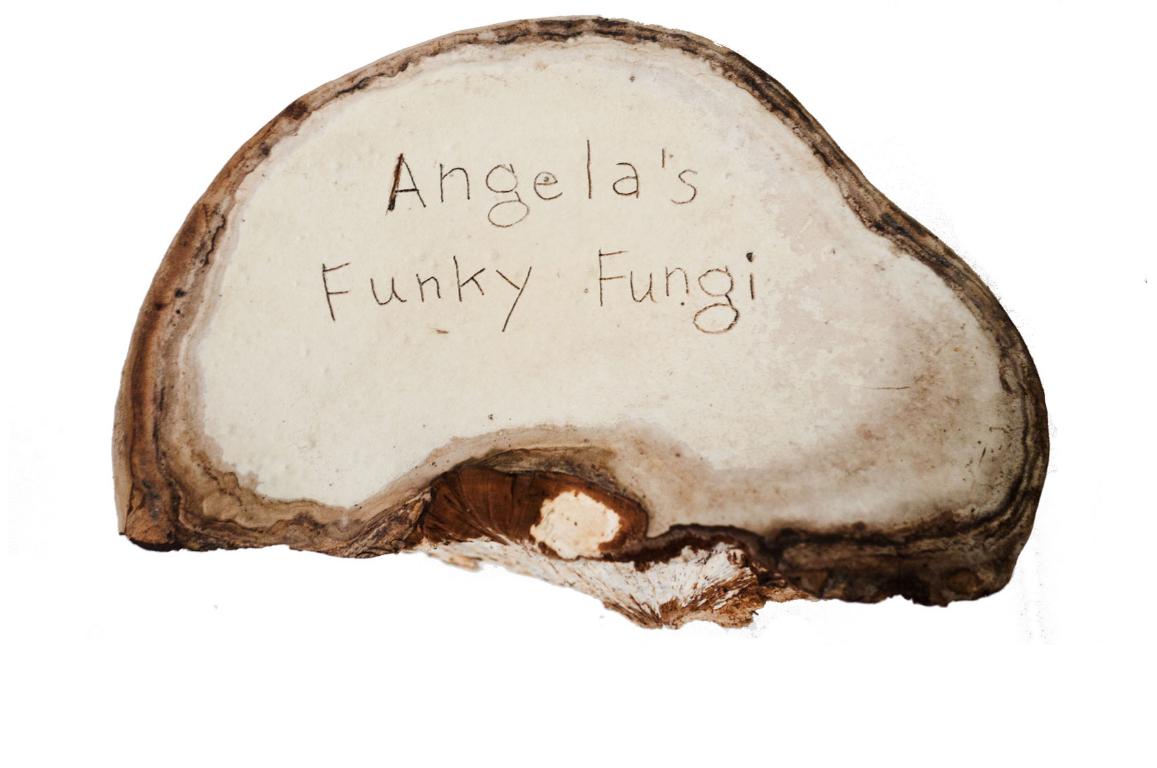 Funky Fungi Comic
