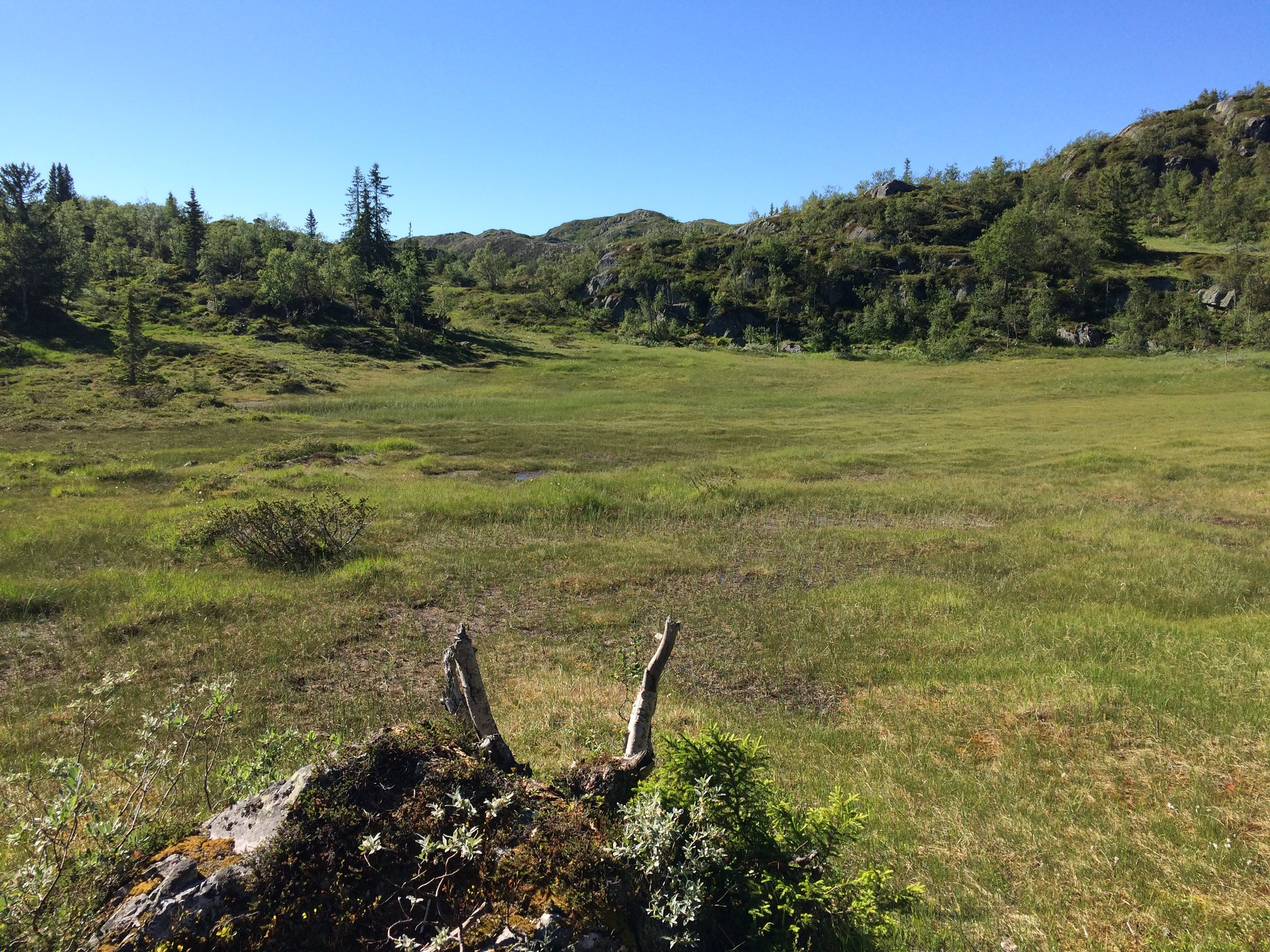 Alpine meadow on the hike.