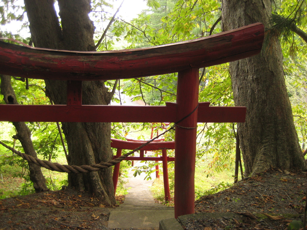 Tori gate and chestnut trees at Tanohata's Ryden shrine.