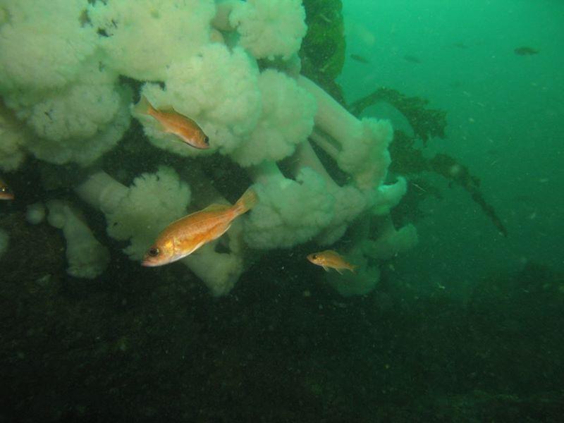 fishplumnosejannanichols.jpg