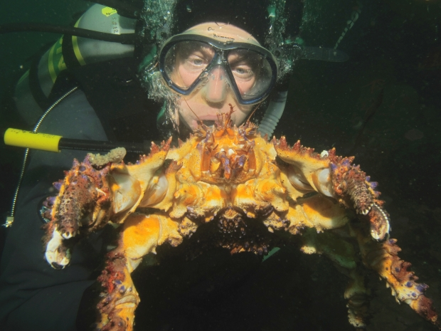 naylor-crab-photo.jpg