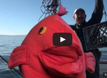 rockfish-recompression.jpg