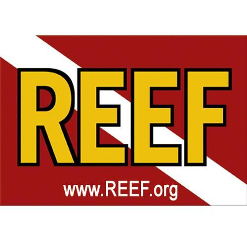reef-logo.jpg