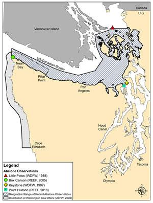 Pinto abalone habitat in Washington (WDFW)