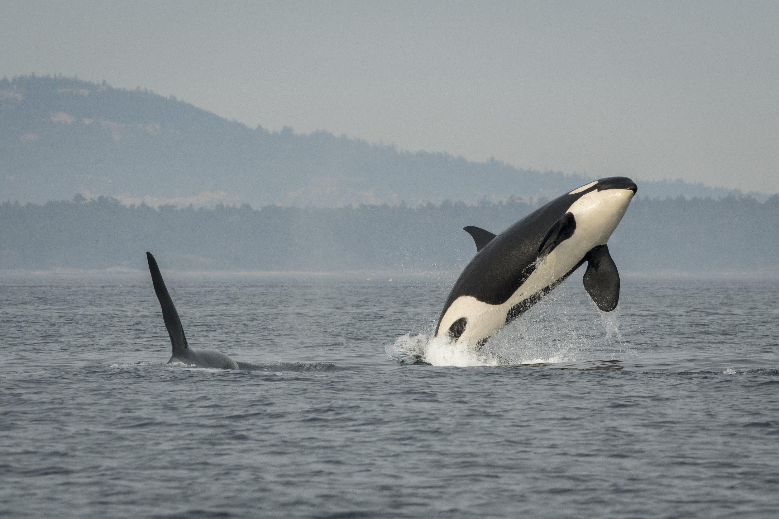 Photo: Katy Foster, NOAA, under permit 18786