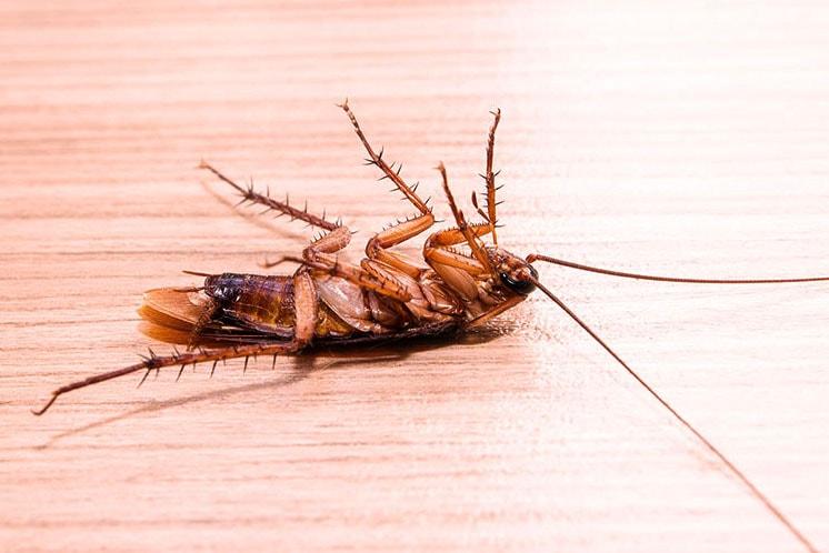 cockroaches -