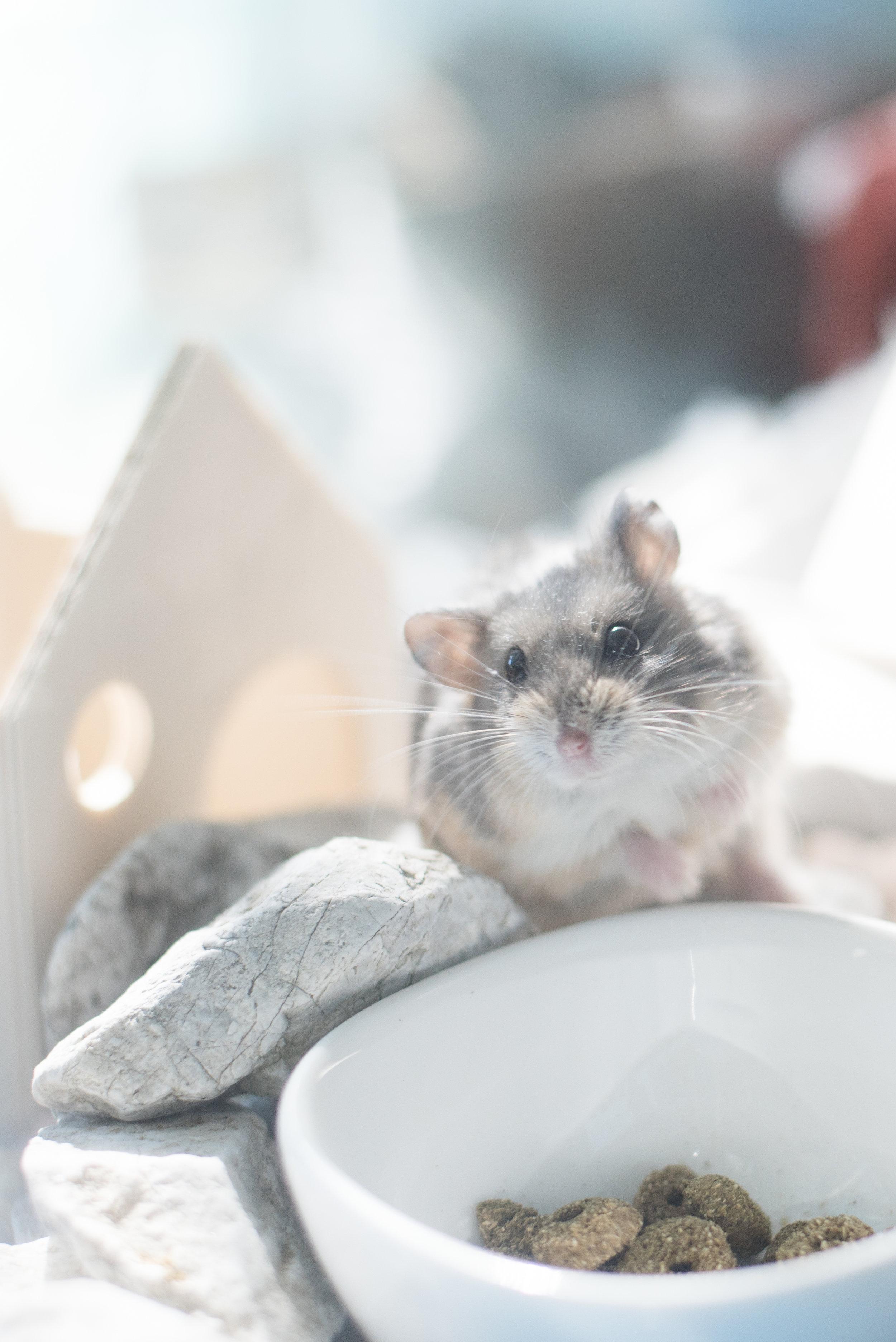 My hamster Mimi 🐹