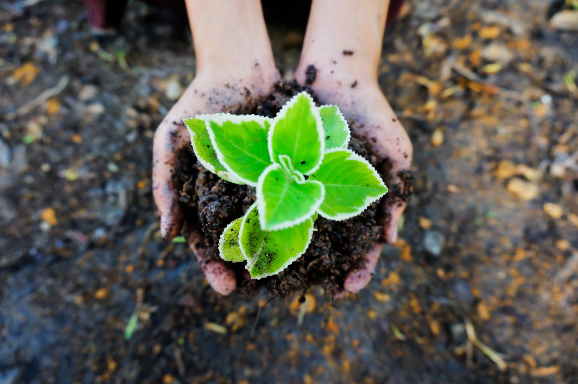 seedling-1558599_1920.jpg