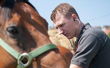 pferde1.jpg