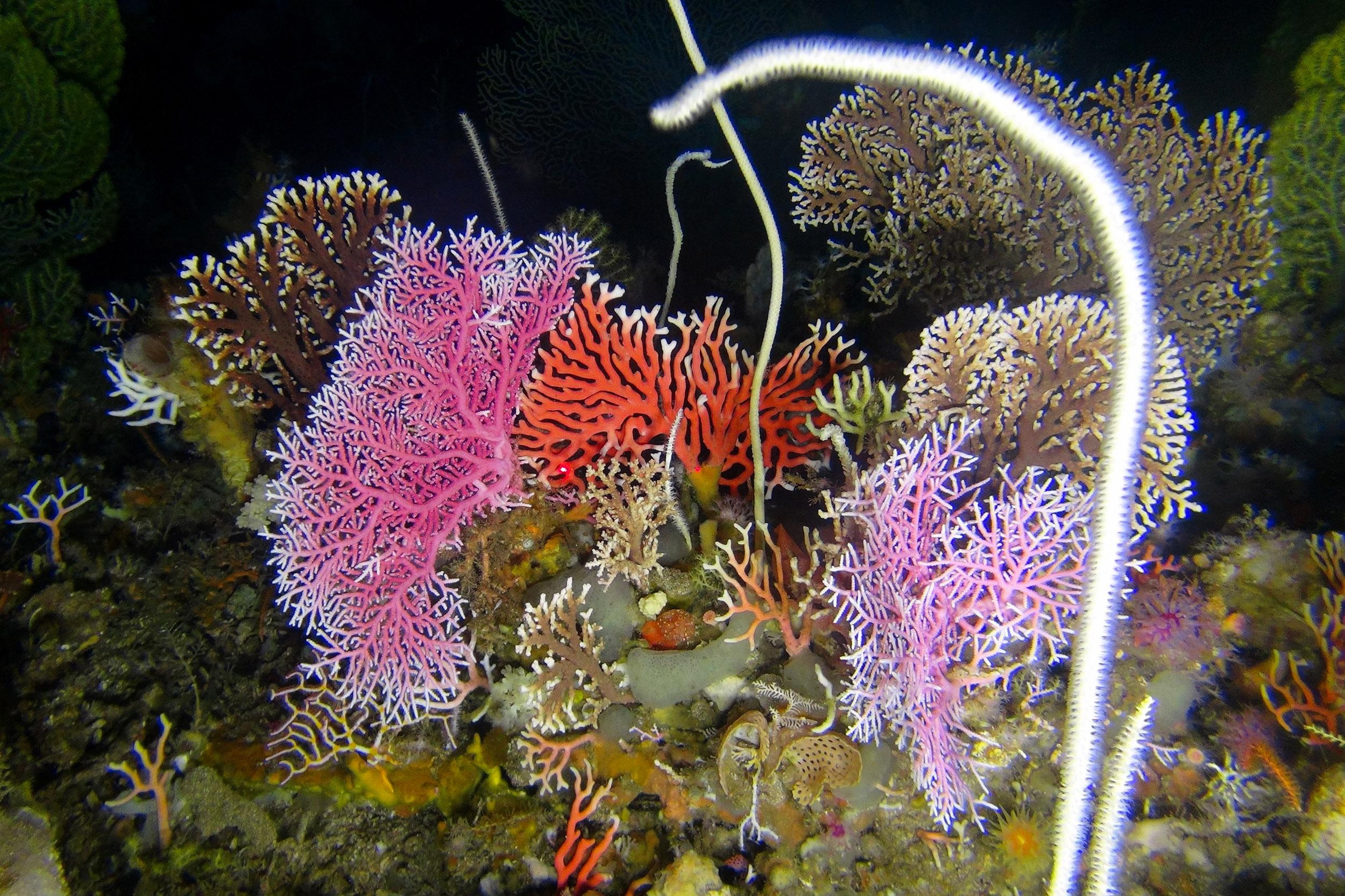 """""""Underwater Fynbos"""""""