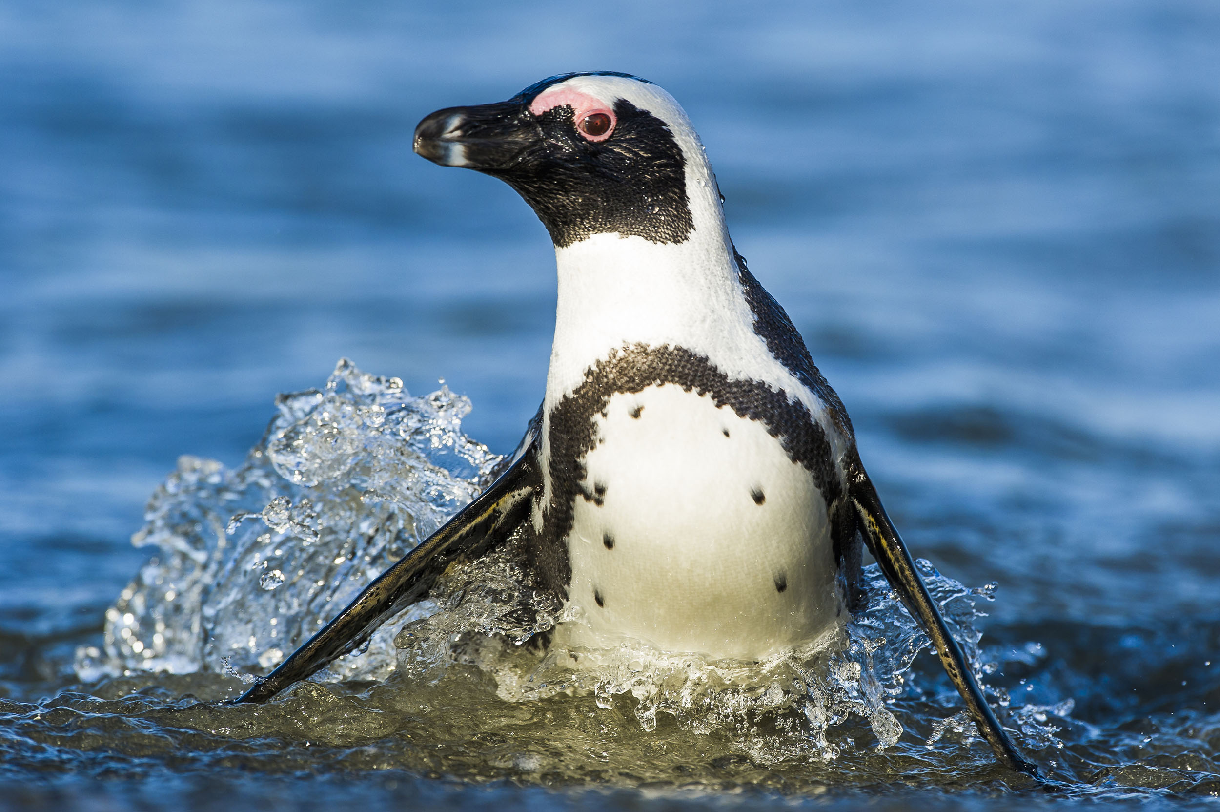 marine-protected-areas-south-africa-species-Peter-Chadwick.jpg