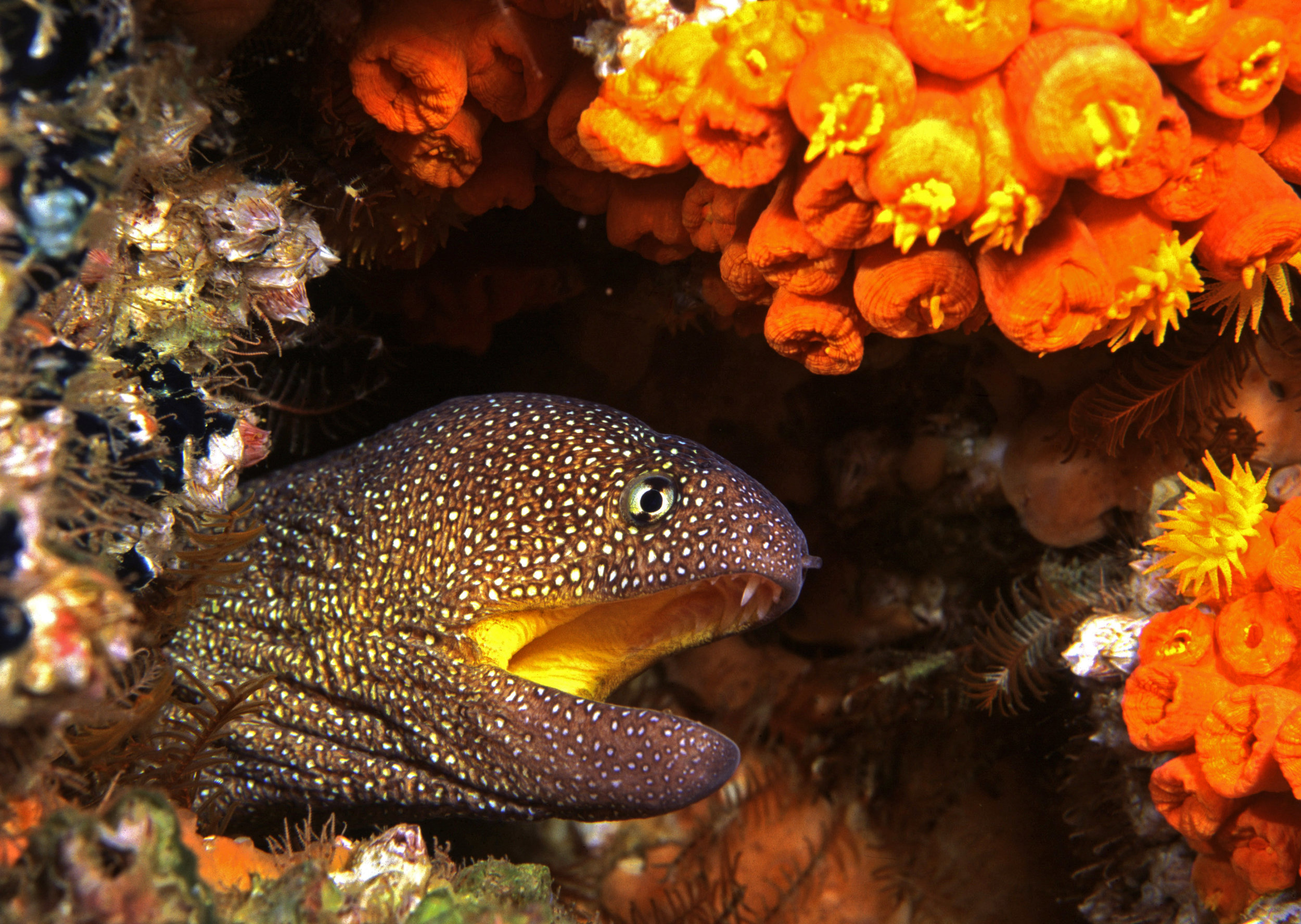 Reefs provide homes for eels (Geoff Spiby)