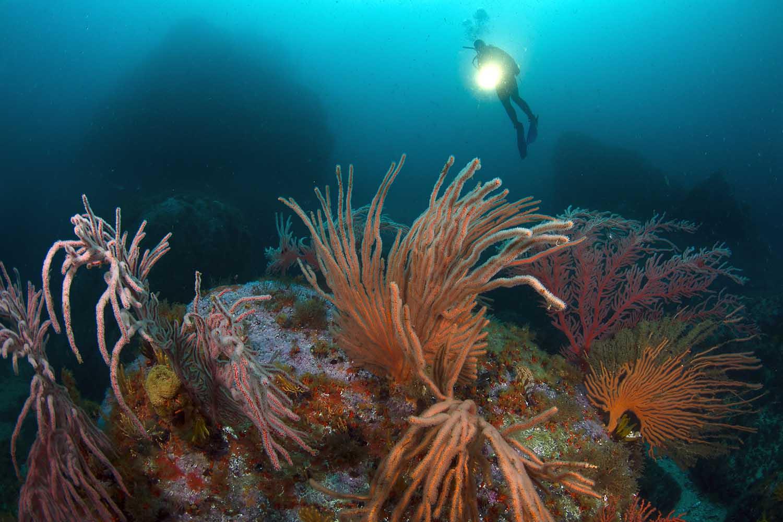 reefs1_web.jpg