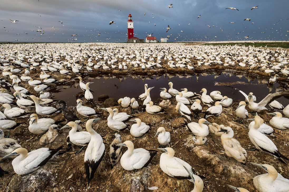 001_Algoa Bay Bird Island_©PeterChadwick_AfricanConservationPhotographer.jpg