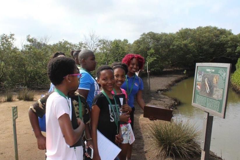education-mangroves-ushaka-sea-world-field-SAAMBR-Disney.jpg