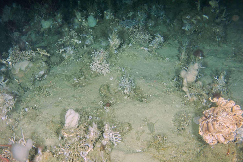 Complex seafloor