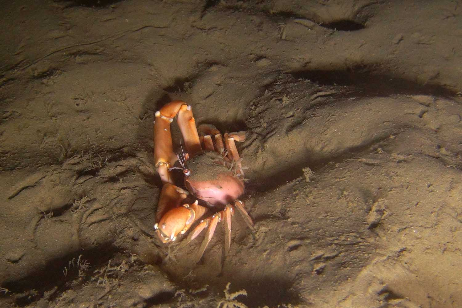 Muddy ecosystems support burrowing crabs and prawns (ACEP Spatial Solutions)