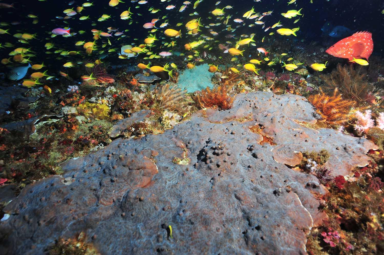 corals2_web.jpg