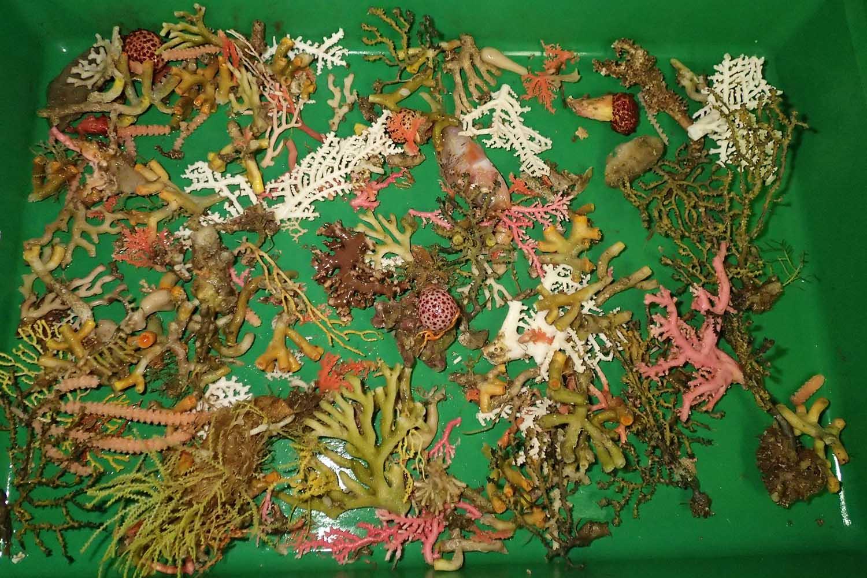 coralsweb.jpg