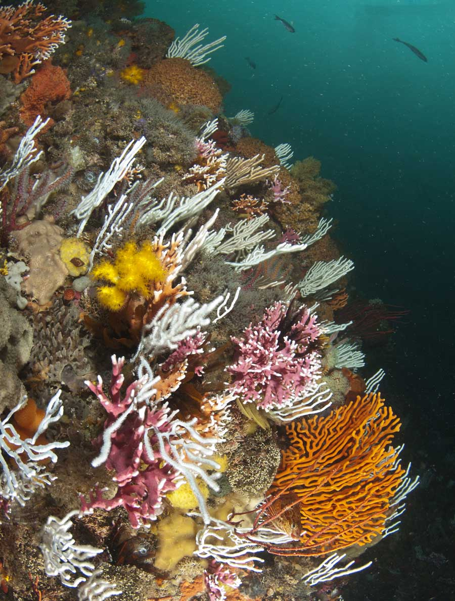 Coral scpe 2.jpg