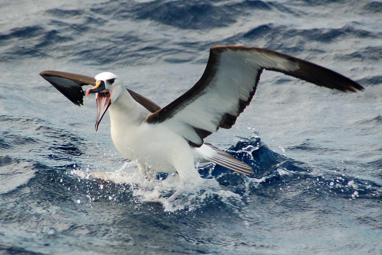 seabirds_kerry.jpg