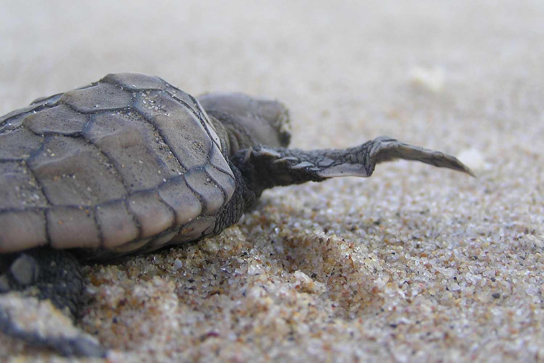 turtlehatch.jpg