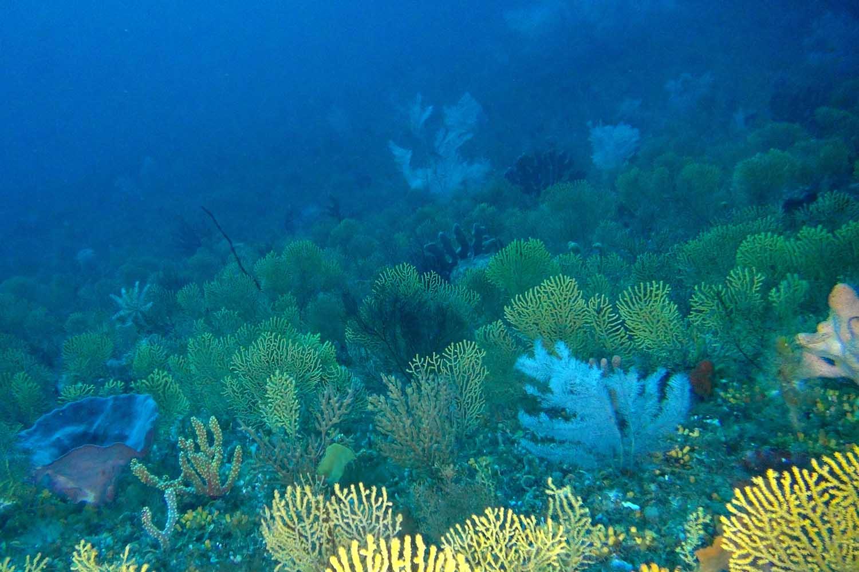 ecosystems -