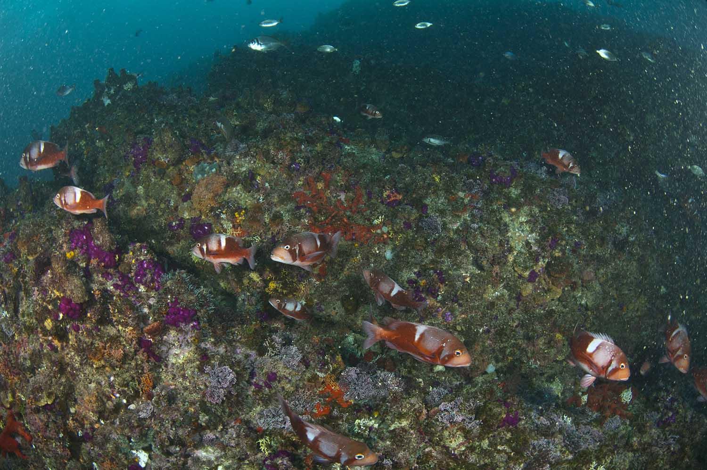 de-hoop-marine-protected-areas-south-africa-steve-benjamin-web.jpg