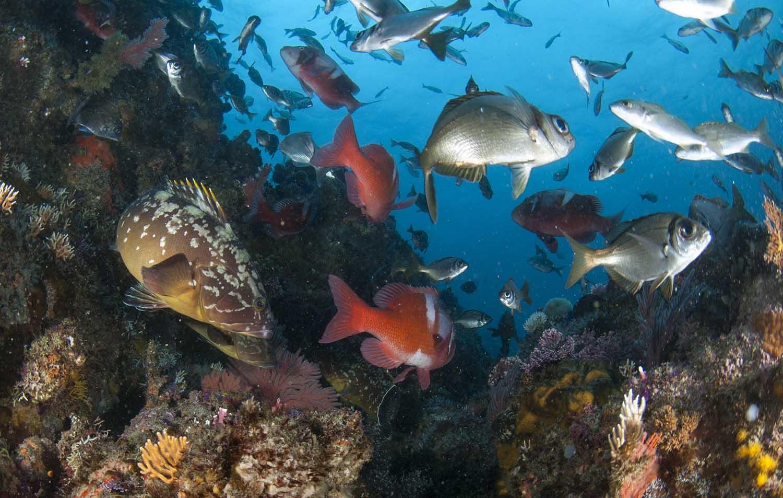 de-hoop-marine-protected-areas-south-africa-steve-benjamin-fish-web.jpg