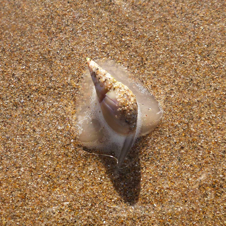 dwesa-cwebe-megan-bulia-plough-snail_web.jpg