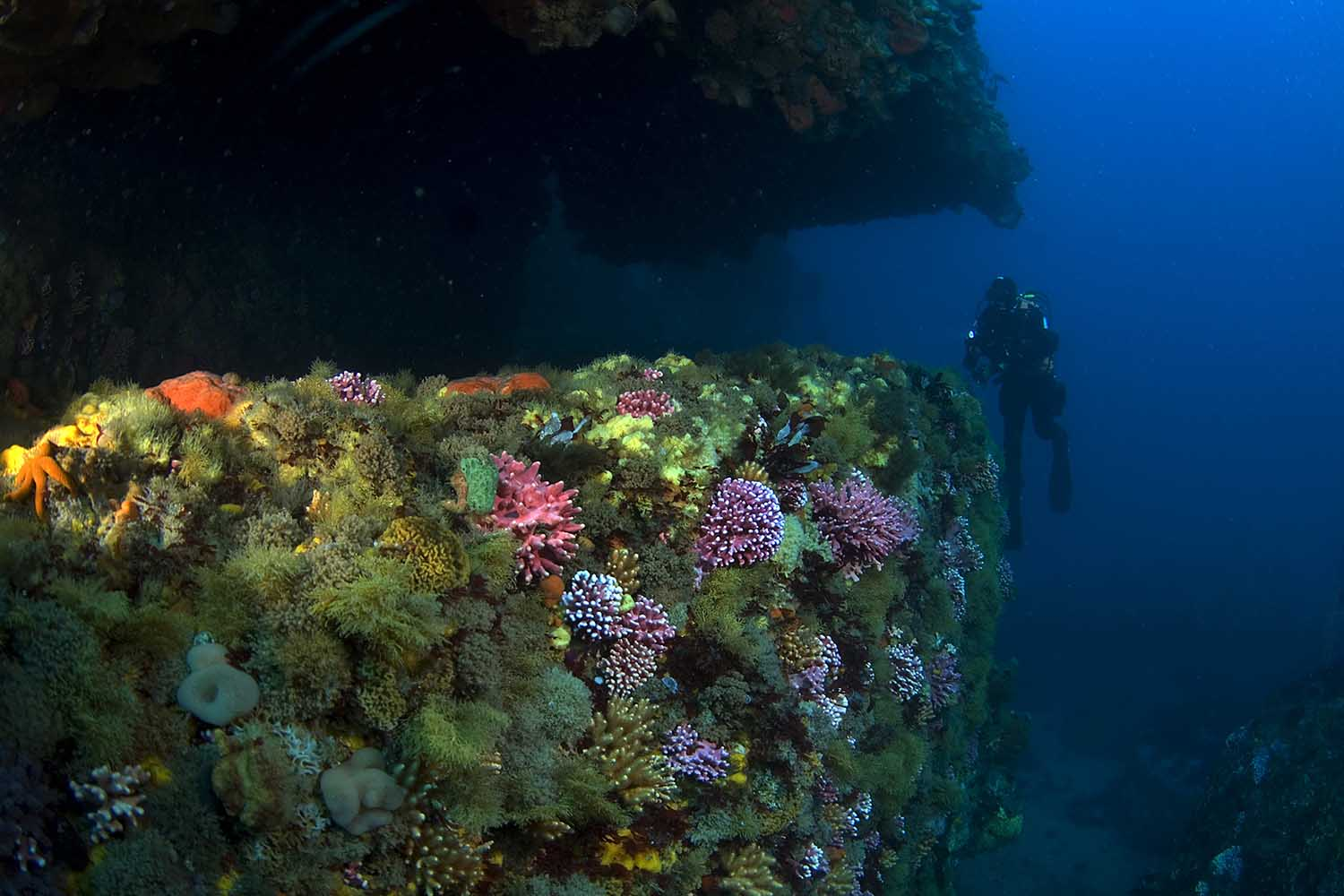 Cold water corals proliferate in the deeper waters (Geoff Spiby)