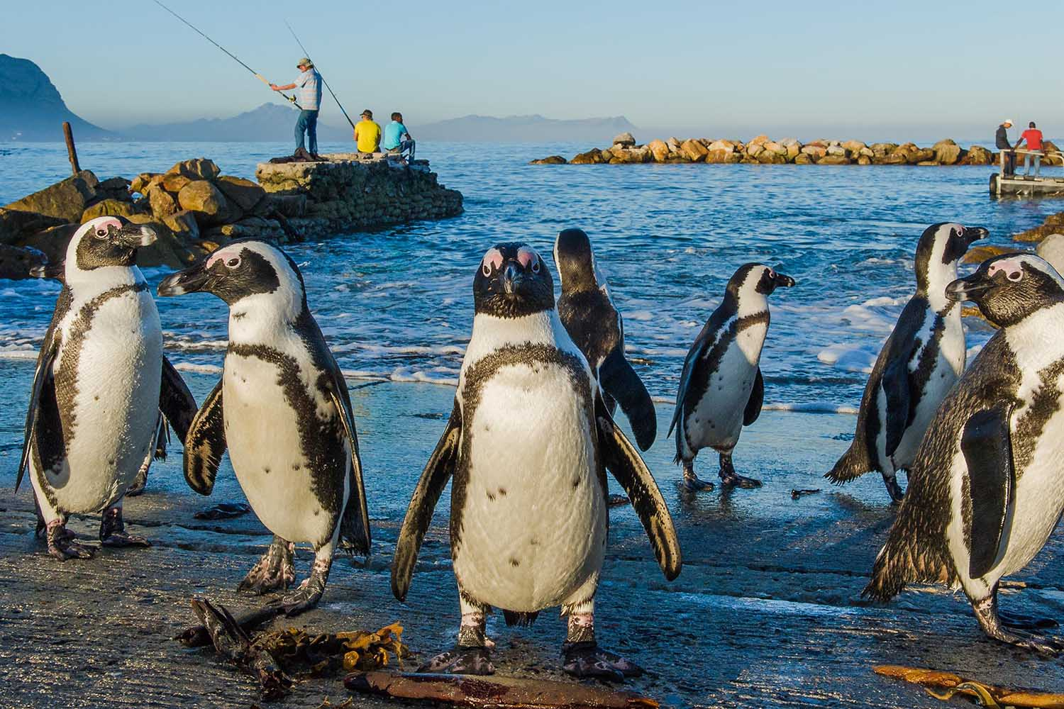 bettys-bay-marine-protected-areas-south-africa-bettys-bay-©PeterChadwick_AfricanConservationPhotographer_web.jpg