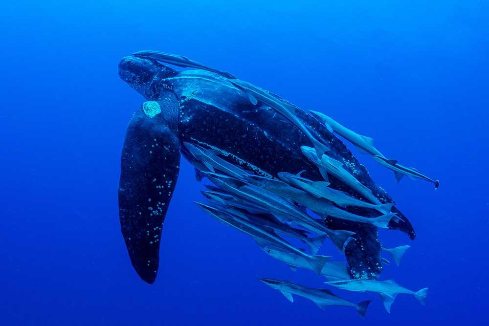 leatherback_shutterstock_web.jpg