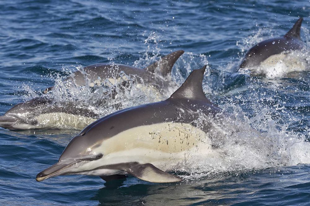pondoland-dolphins-marine-protected-areas-south-africa-steve-benjamin_web.jpg