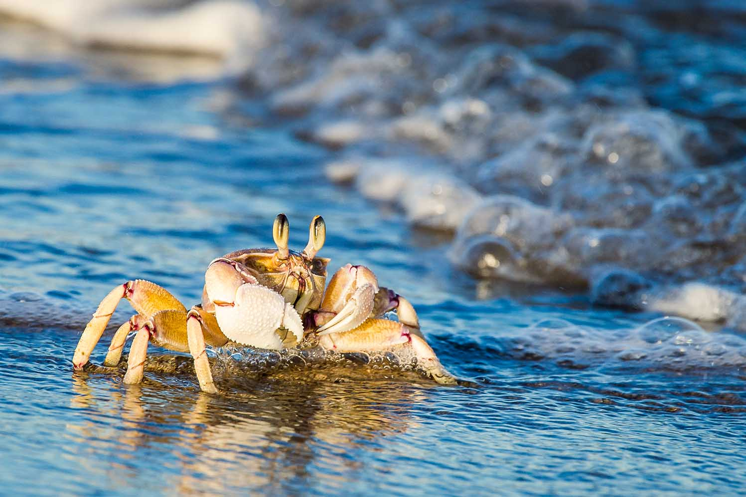 trafalgar-marine-protected-areas-©PeterChadwick_AfricanConservationPhotographer-3-web.jpg