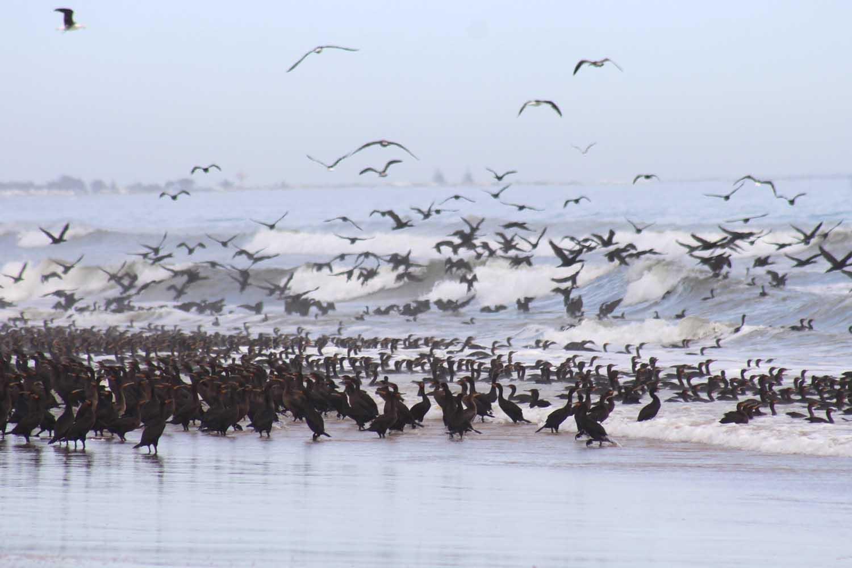 rocherpan-kerry-sink-cormorants-web.jpg
