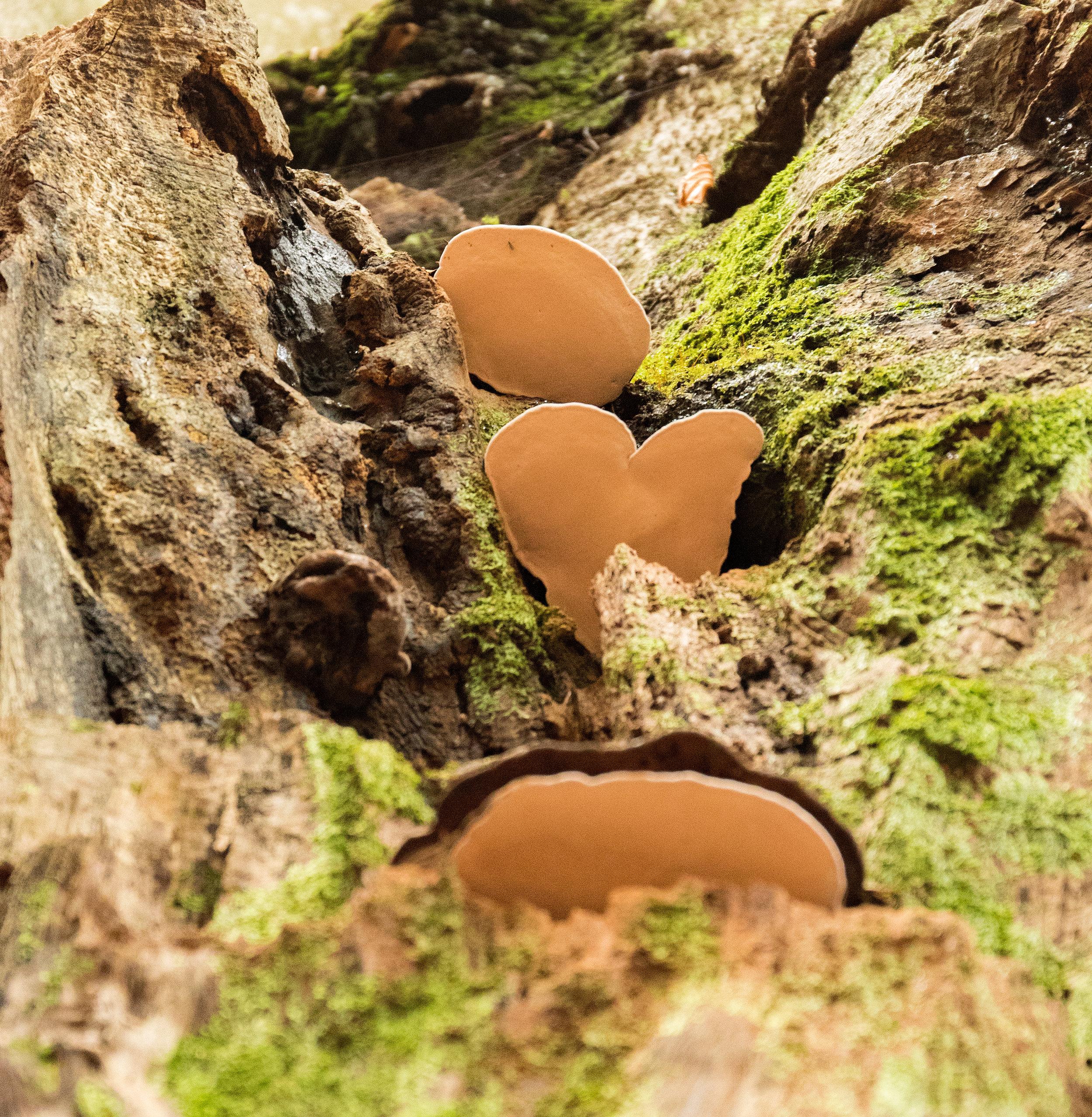 love fungi.jpg