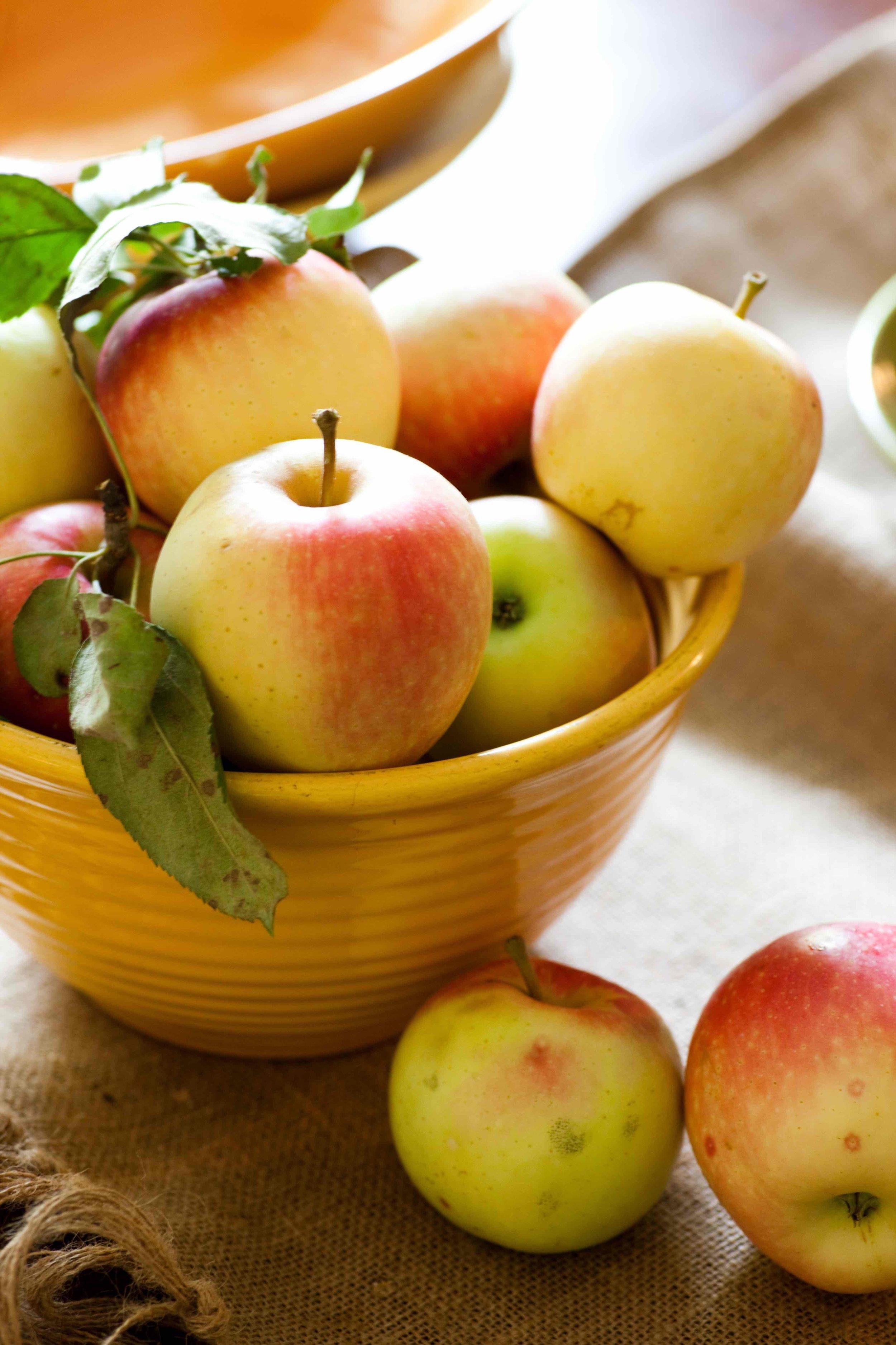 fall apples-sara_shoot3_0339 copy.jpg