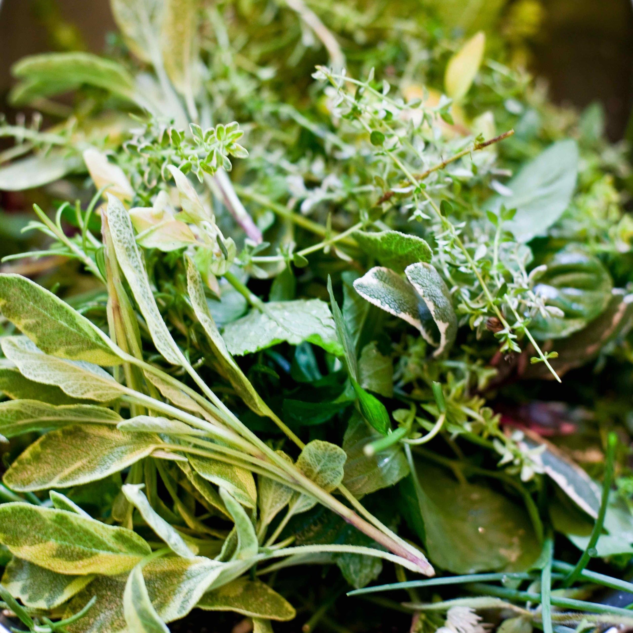 garden herbs-sara_shoot2_0163 copy.jpg