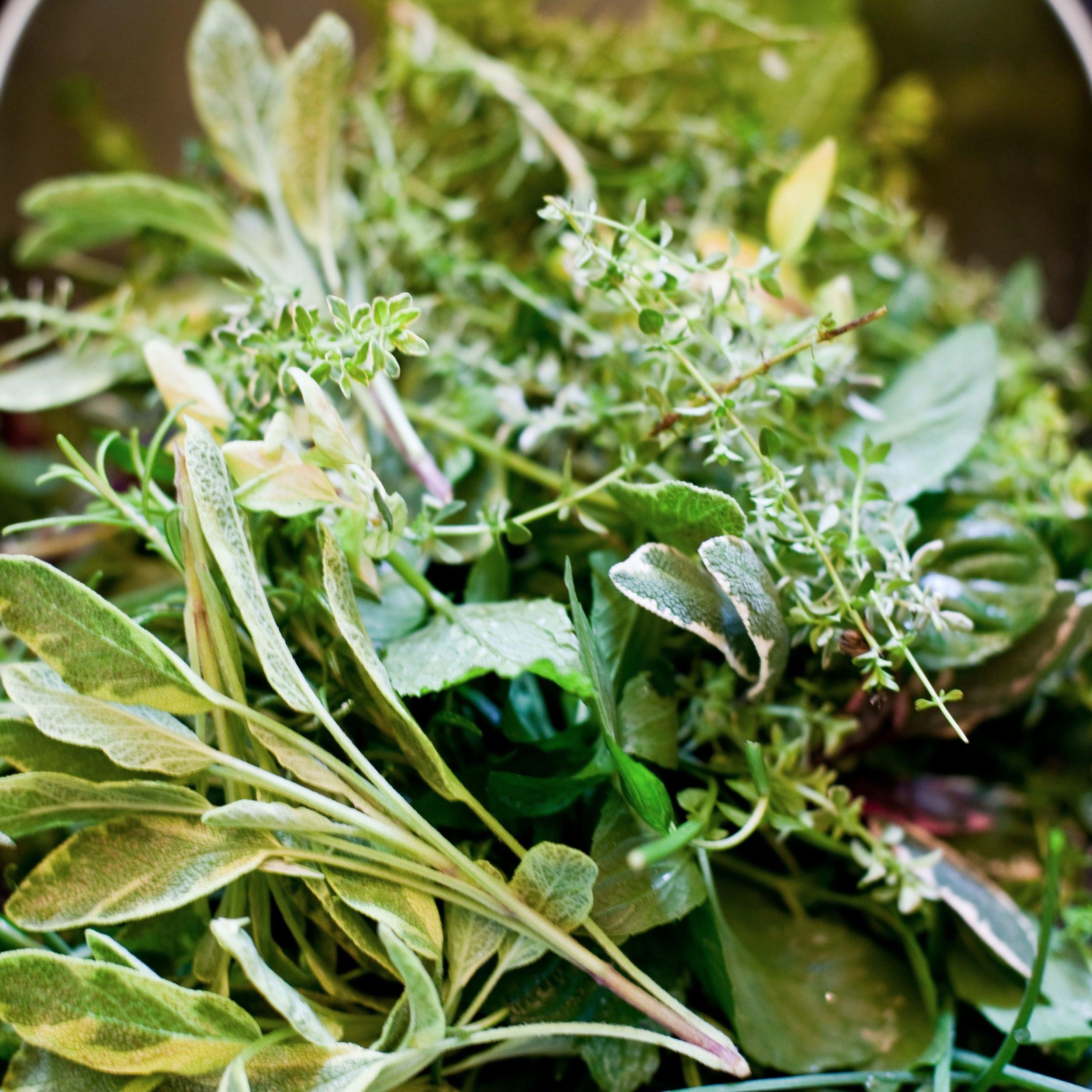 herbs-.jpg