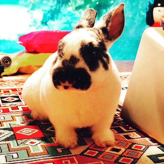 Just some Monday bunny content for good measure. #basilbunbun