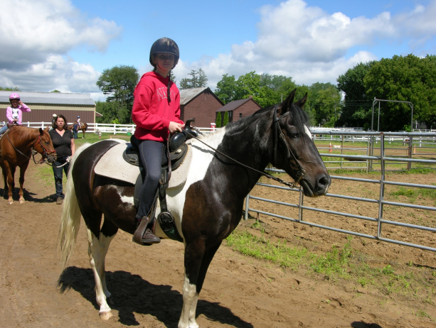 SUNDANCE - paso fino with the classic short, smooth steps; majestic trot and canter; always nudging for treats; shows you a smile now and then