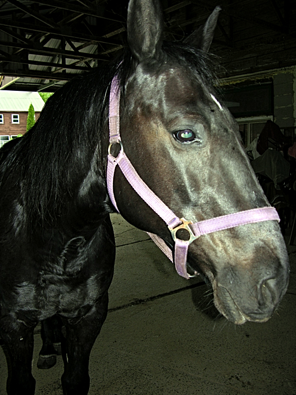"MIDNIGHT - boss #1 to horses; he will be your friend if you make him feel ""special"""