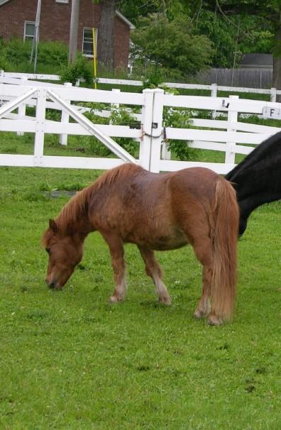 PUMPKIN - good lesson pony for small children; tutor for Flori