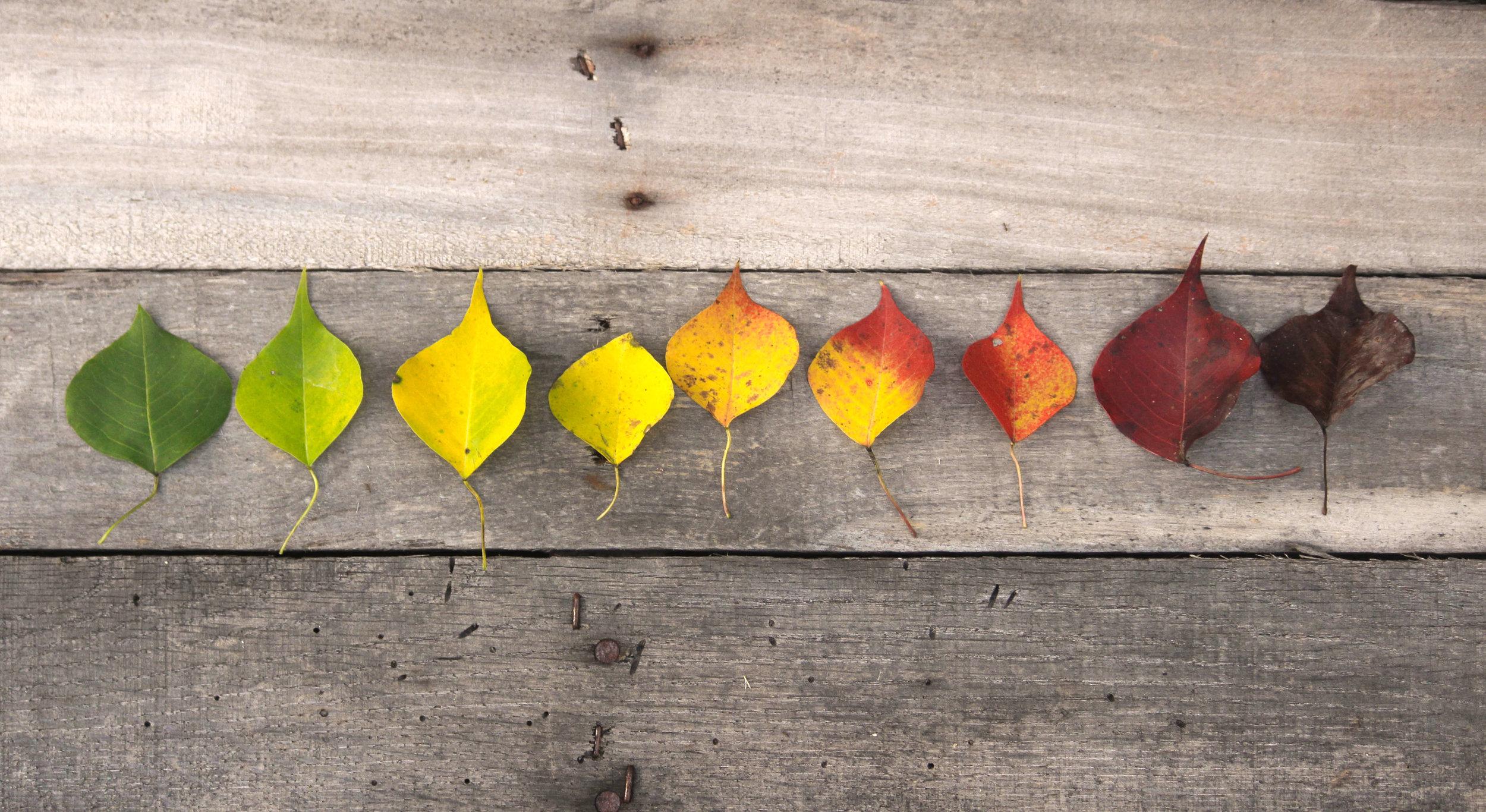 SOC Leaves - StockSnap_OX253EDR6R_1.jpg