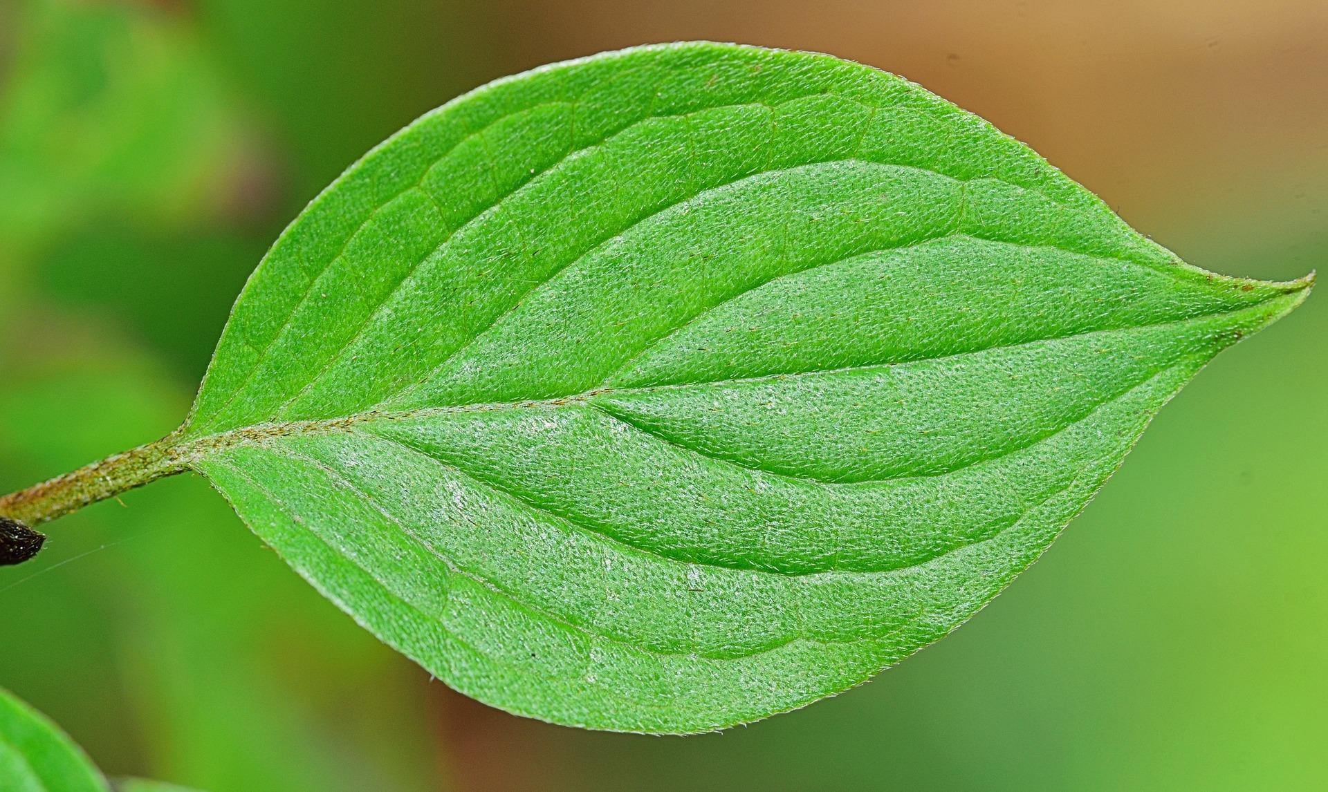leaf-be-inspired.jpg