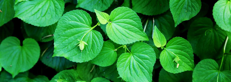 green-leaves-retreats.jpg