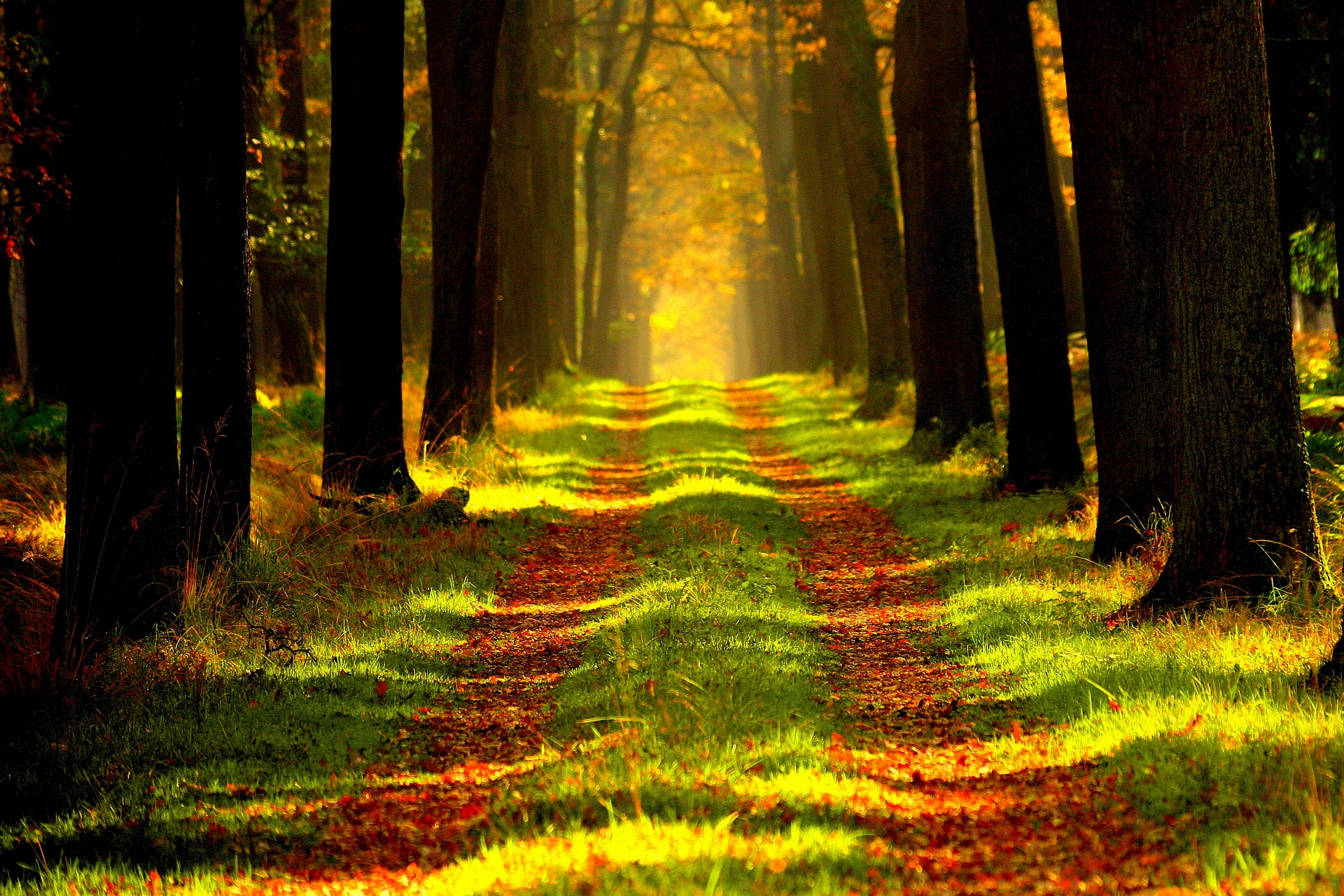 forest path light-868715_1920.jpg