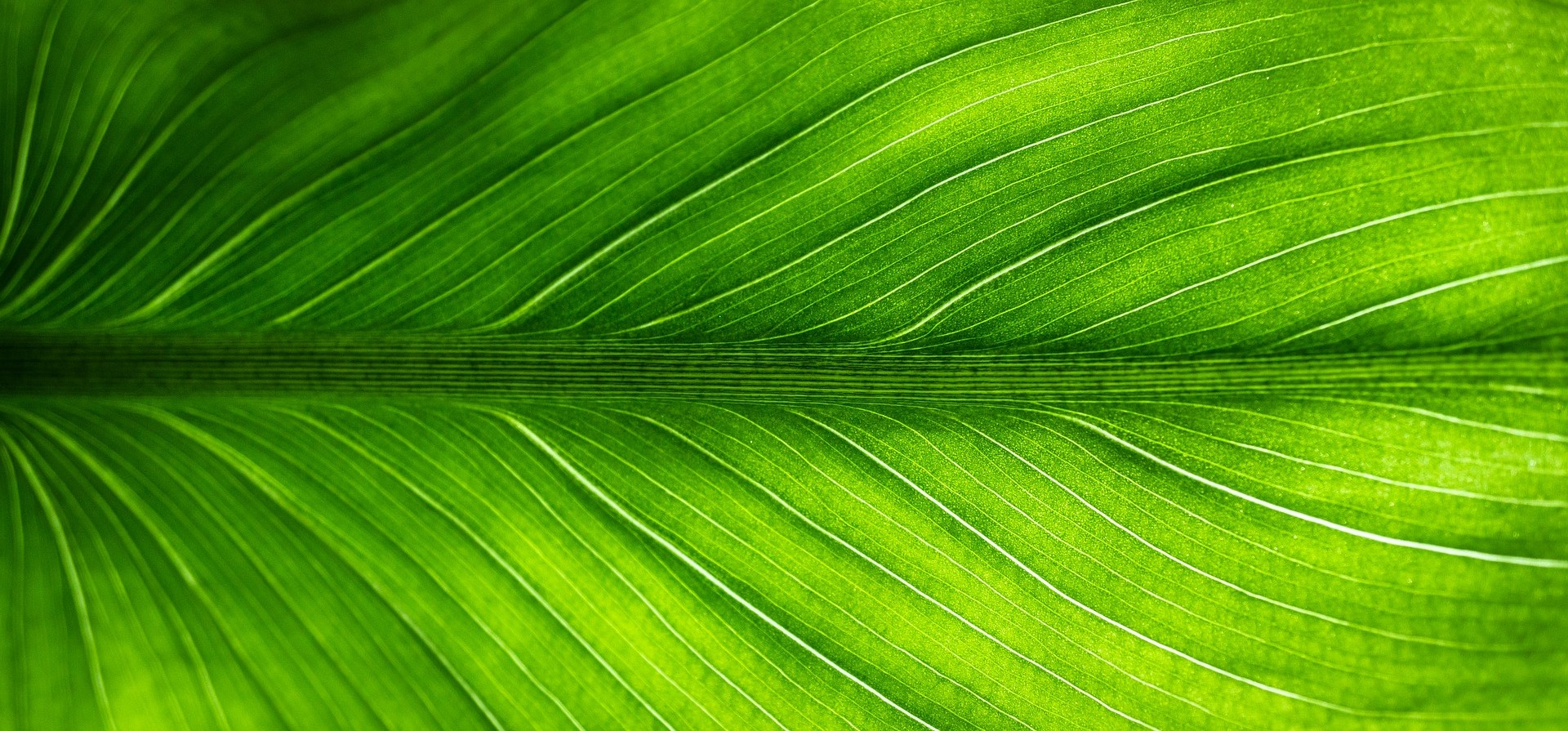 green leaf-2210973_1920 - right.jpg